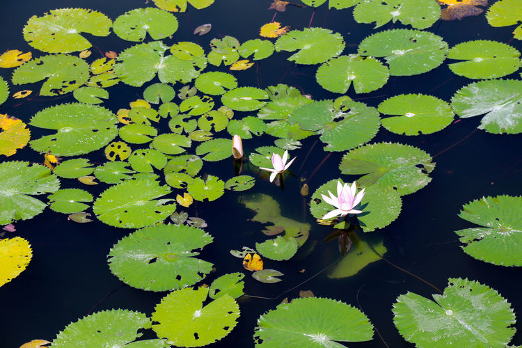 Beauty In Nature Day Growth Light And Shadow Lilies Nature Photography Tranquility Water