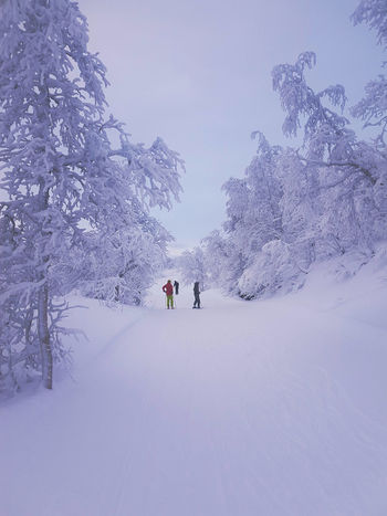 Ski through very light and fluffy snow in Tarnaby Ski Slope Skiing Sweden Tärnaby Winter Beauty In Nature Cold Temperature Extreme Weather Leisure Activity Mountain Outdoors Ski Holiday Snow Snow Powder Snowcapped Mountain Tree White Color Winter EyeEmNewHere My Best Travel Photo