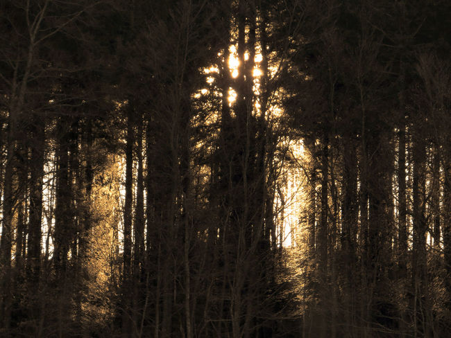 Light In The Forest Beauty In Nature Darkness And Light Forest Landscape Nature No People Outdoors Scenics Tranquil Scene Tranquility Tree Winter
