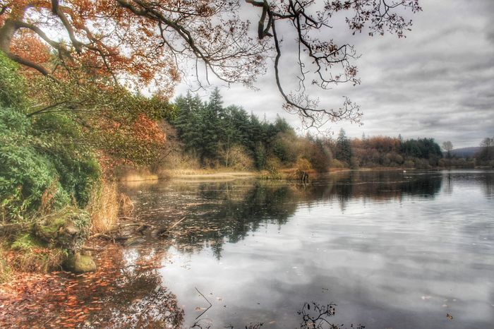 Hillsborough Forest Northern Ireland Natures Magic Autumnal Colours EyeEm Best Shots Beauty In Nature EyeEm Nature Lover EyeEm Best Shots - Nature Awesome_nature_shots Exceptional Photographs Hillsborough Forest Park Hillsborough Forest And Lake Best Of EyeEm Background EyeEm Gallery Creative Light And Shadow Our Best Pics Winter Sun Forest Tree Woodland Walk Forest Photography Lake Lakeside Reflection Shades Of Winter