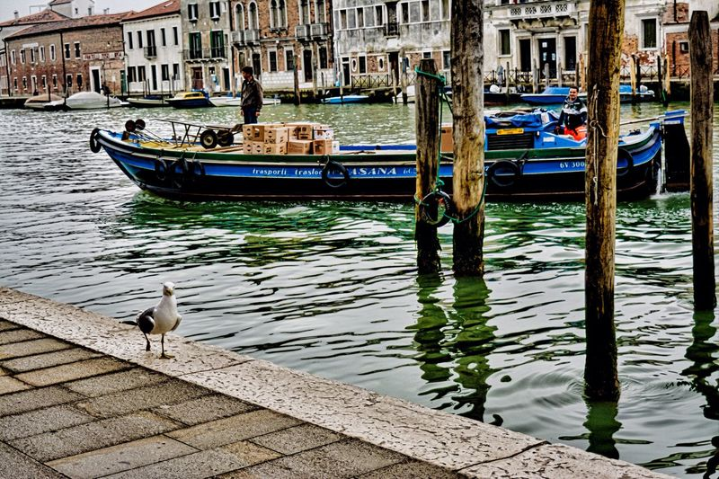 TakeoverContrast Bird Venice Italy Footpath Water Architecture Colors Sea Vintagestyle
