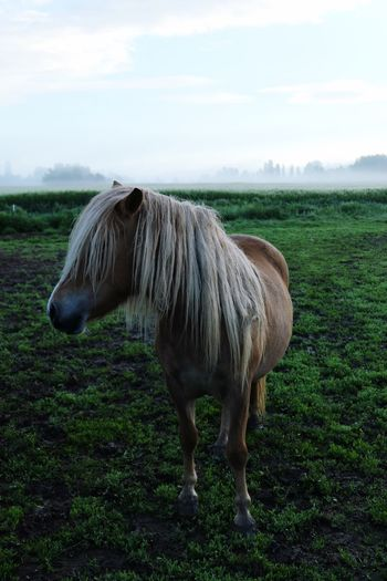Horse standing by plants on grassy field
