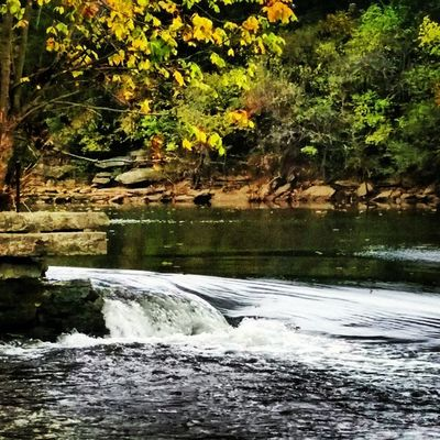 Silver Springs Smyrna, TN USA Tennessee Home_sweet_home Autumn Nature Trees Greenery FALL_COLORS Insta_exploring Instatennessee Instagram Ig_unique LIKE_A_LOCAL Creek Dam Ig_cosmopolitan INSTA_USA