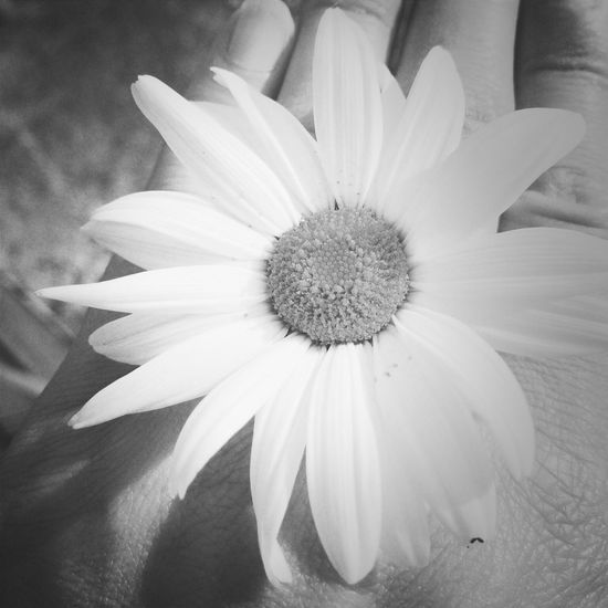 Flower Collection Black And White Flower