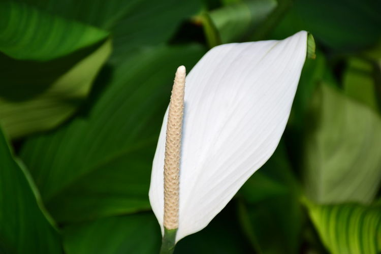 Close-up of white flower plant
