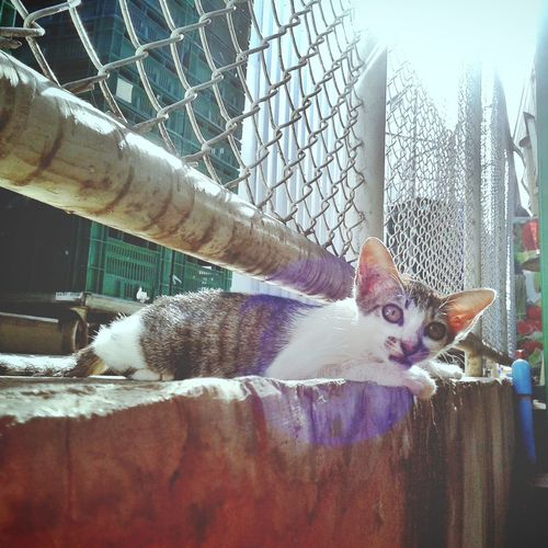 Animal Themes Cage Cat Day Domestic Animals Domestic Cat Feline Looking At Camera Mammal No People One Animal Outdoors Pets Portrait
