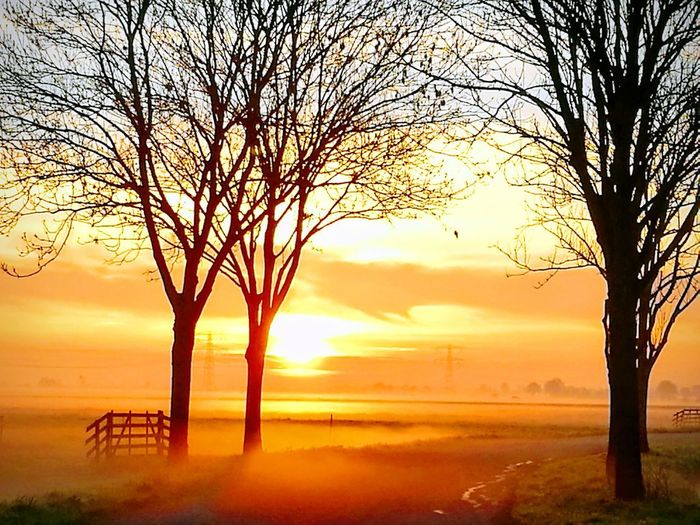 Beautiful Landscape 😍 Edited Early Morning Upcoming Of The Sun. Fog Behind The Trees And Field. Trees And Sky Romantic Sky Yellow Color Orange Color Orange Sky Romantic Romantic Sky Tree Sunset Oil Pump Sea Rural Scene Silhouette Branch Sunlight Sky Horizon Over Water Dramatic Sky Foggy Cloudscape Meteorology Stratosphere Bare Tree Fog Tranquil Scene Calm