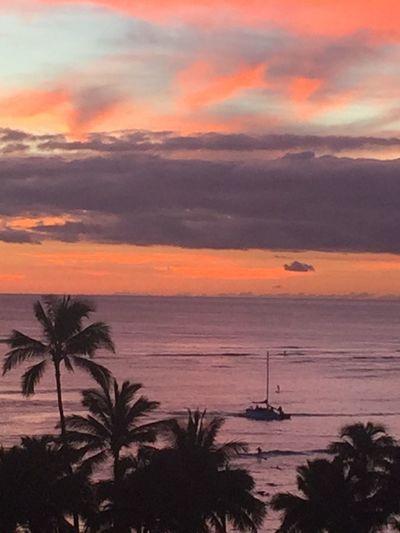 Waikiki Sunset Oahu Sunset Waikiki Beach Waikiki Tropics Pacific Sky Hawaiian Sunset Island Of Oahu, Hawaii Purple Color Pink Color Pacific Ocean Sky Pacific Ocean View Palm Trees 🌴 Pacific Sunset No Edit/no Filter Orange Color Silhouette No People An Eye For Travel