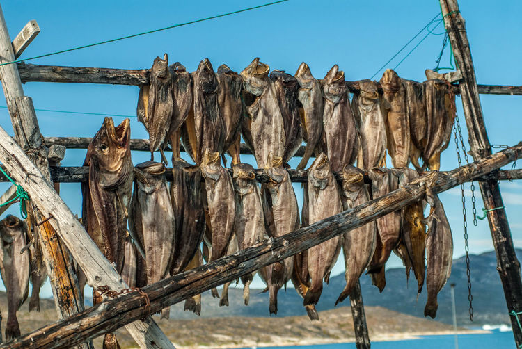 Fish hanging on fence against sky