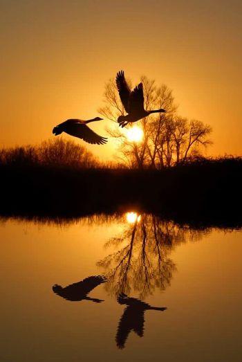 ☀ bird Sunset