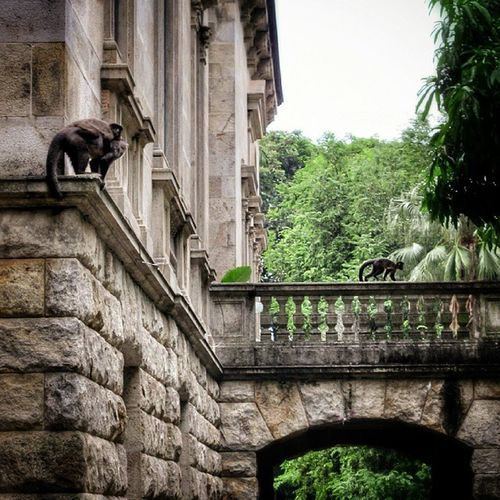Parquelage Riodejaneiro Cariocapics Naturelover Monkeys Nature_shooters EyeEm Nature Lover Natgeohub Animal Photography Architectural Detail
