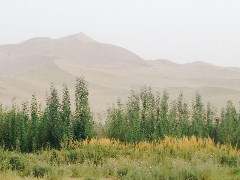Trip Nature 敦煌 沙漠