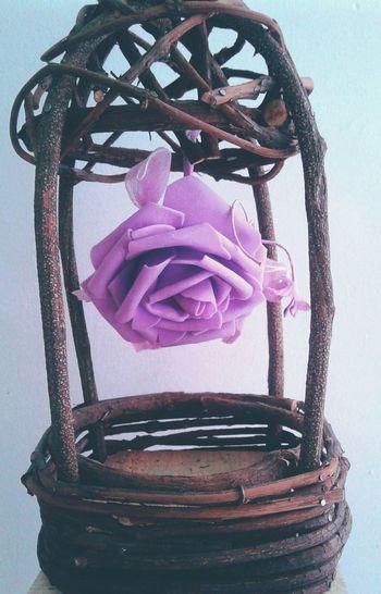 Studio Shot No People Flowers Flores Adornos Ornament