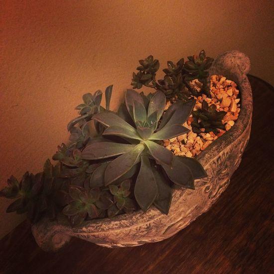 Succulents Cactus_maramia EyeEm Cactus I Love Cactus