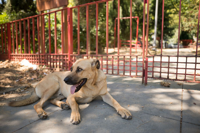 Thirsty Stray Dog Animal Animal Themes Bebek Close-up Dog Dogs Fence Focus On Foreground Istanbul Istanbul Turkey Natanomalous.com Nature Nature Photography Nature_collection Stray Dog Sun Sunlight Thirst Thirsty  Tongue Out Wide Wide Angle