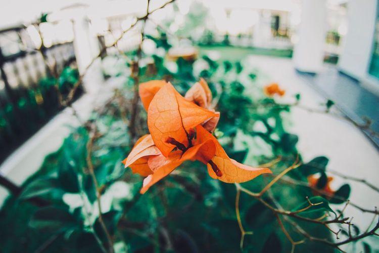 ดอกไม้ Leaf Plant Part Plant Close-up Nature Beauty In Nature Focus On Foreground Orange Color No People Day Flowering Plant Flower Growth High Angle View Autumn Vulnerability  Fragility Freshness Outdoors Petal
