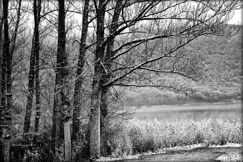 Landscape #Nature #photography in Black And White Winter Trees Melancholic Landscapes