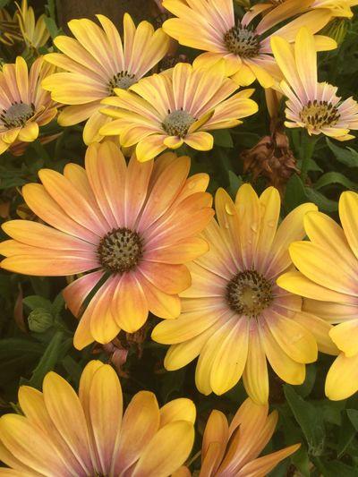 Flower Flowering Plant Freshness Fragility Vulnerability  Flower Head Petal Beauty In Nature Close-up Plant Botany