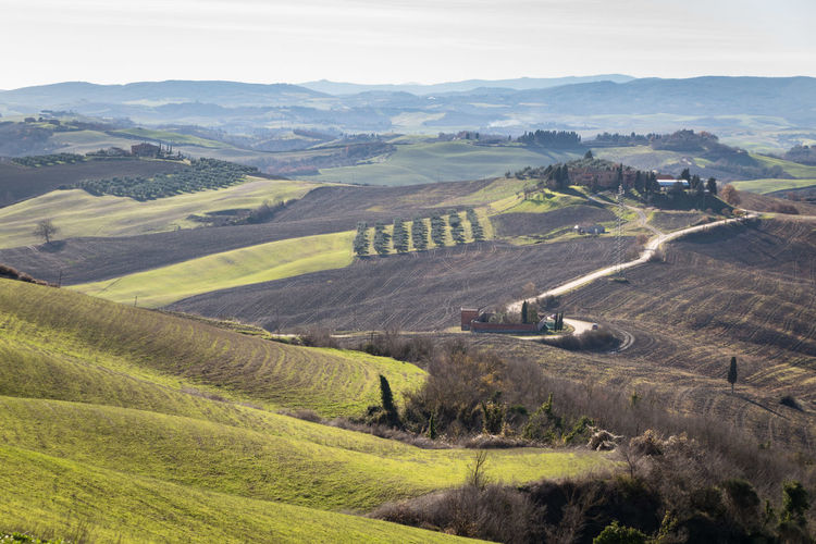 Environment Landscape Scenics - Nature Land Field Tranquil Scene Agriculture Plant Rural Scene Beauty In Nature Nature Tranquility Day Non-urban Scene High Angle View Tree Growth Farm No People Outdoors Rolling Landscape Siena Tuscany Italy