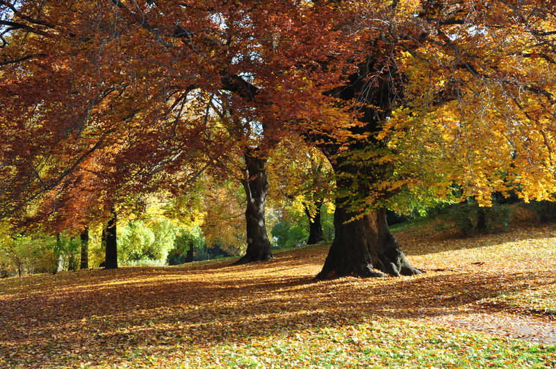 Autumn Leaves Fallen Leaves In The Water Tree Autumn Autumn Season Beauty In Nature Big Beech Tree Change Growth Landscape Landscape Garden Leaf Leaves_collection Nature No People Parc Guell Recreational Pursuit Scenics Tranquility Tree