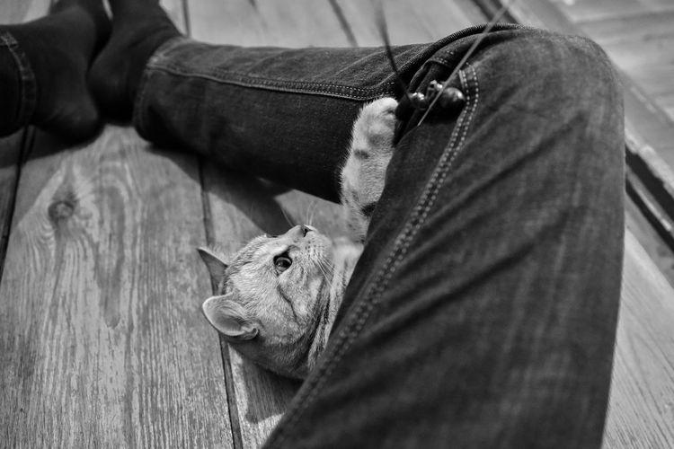 Play Cat Katze