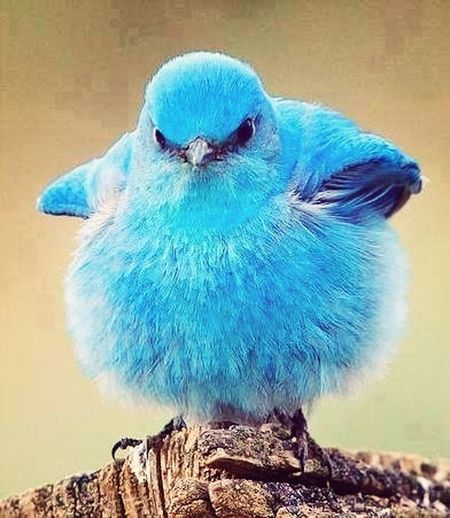 Amazing bLuE biRd!!!' Taking Photos Peace And Love