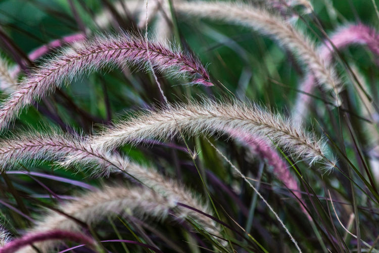 Grass in the city 2 Grasses City Flower Full Frame Close-up Plant Plant Life Botany Wildflower Growing