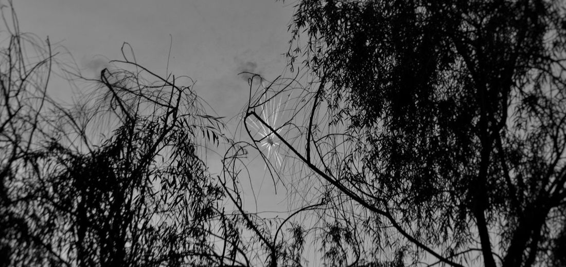 Crack in the matrix Sky Leaves Shutter Speed Explode Explosion Perspective Black And White Blackandwhite Fireworksphotography Firework Fireworks Firecracker Crack Looking Up Nature Close-up Scenics - Nature Silhouette Branch