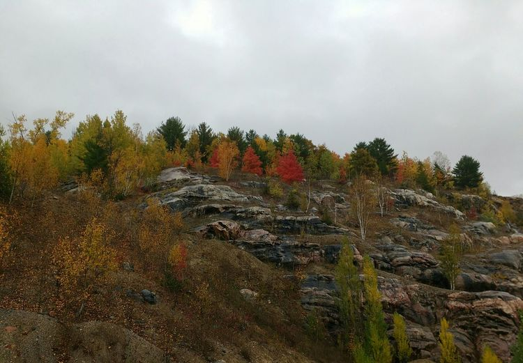 A cliff with colorful trees Fall Colors Fall Trees Cliff Nature Colors Nature_collection Changing Seasons Canada Coast To Coast Quebec Beautiful Tranquility Tranquil Scene Rock Formation Tree_collection  Popular EyeEm Best Shots EyeEm Nature Lover Eye4photography  Cliffs And Trees Nobody Autumn Autumn Colors Sky My Year My View