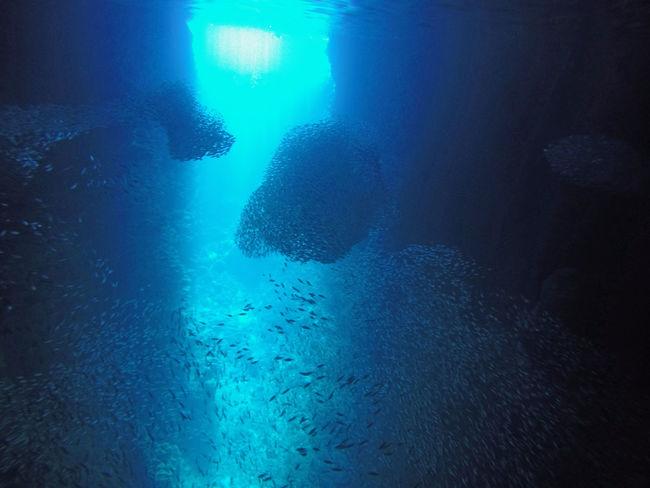 Circumnavigation Diving Fish Cloud South Pacific Tauchen Tonga Weltumseglung