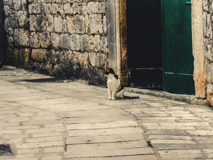 Cat Cats Cats