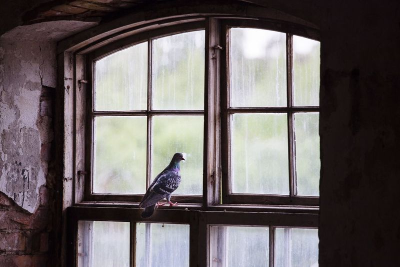 Pigeon perching on window of abandoned building