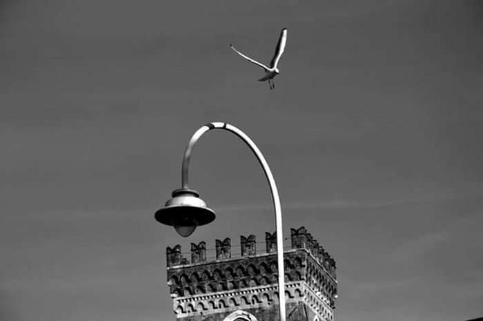 Seagull Tower Black And White Lampione Gabbiano
