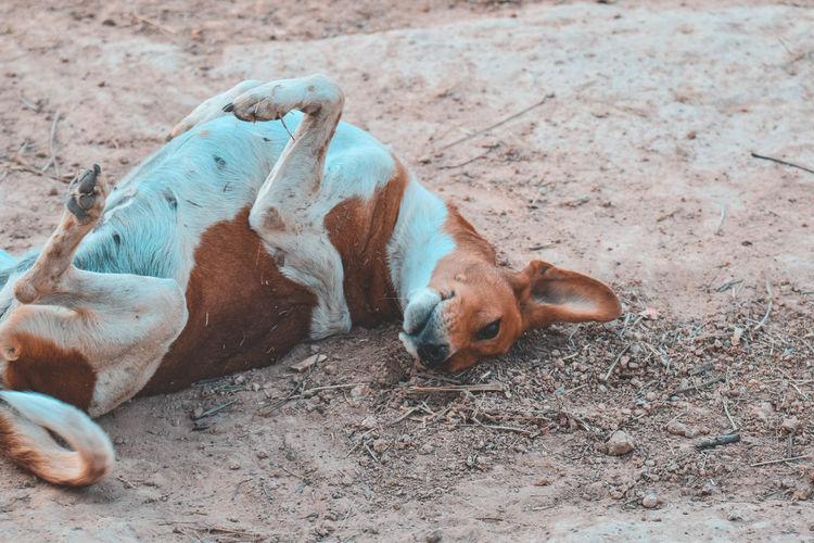 High angle view of dog sleeping on land