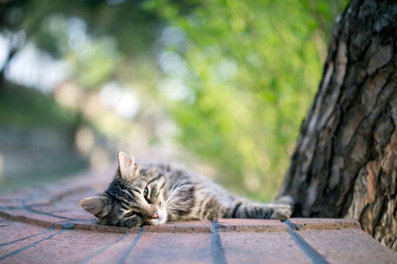 Portrait of cat lying on tree