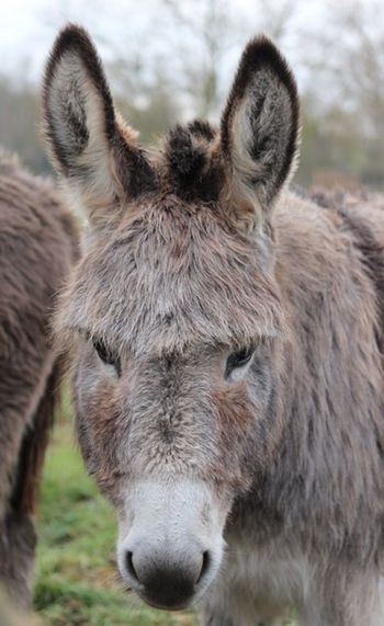 Animal Animal Themes Animal Wildlife Mammal One Animal Animals In The Wild Vertebrate Donkey