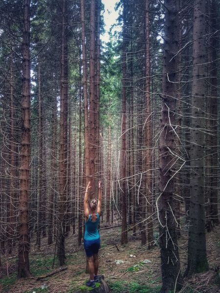 Romania Hiking Hikingadventures Hiking_walking Outdoor Photography Romania Outdoor Pine Tree Tree Forest Tree Trunk Childhood Young Women Standing Pine Woodland Evergreen Tree Pine Wood Eastern Europe WoodLand Pinaceae Pine Cone A New Beginning