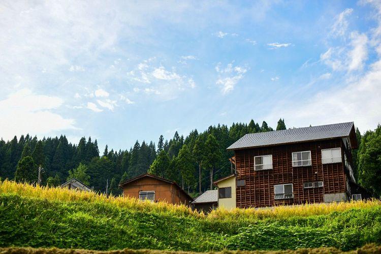 どこか、牧歌的な里山の記憶。 Plant Tree Architecture Built Structure Building Building Exterior Sky House Nature Cloud - Sky Green Color Land Day Beauty In Nature Grass Landscape No People Field
