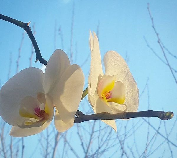Ofis penceremdeki güzeller & Gokyuzu 💙 Orkide Flowers Istanbul Penceremden Objektifimden Istanbuldayasam Anilarinisakla Flower Orchids Sky Igturko Ig_turkey Aniyakala Turkishfollowers