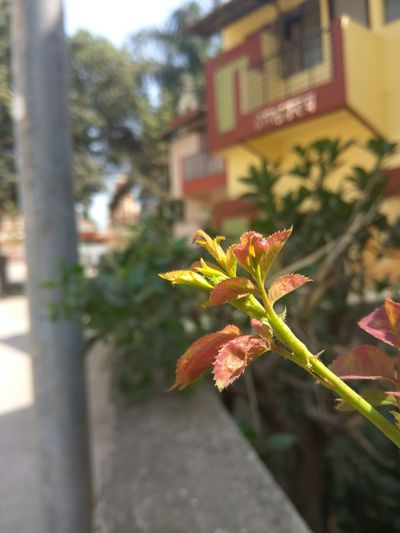 Close-up of plant in city