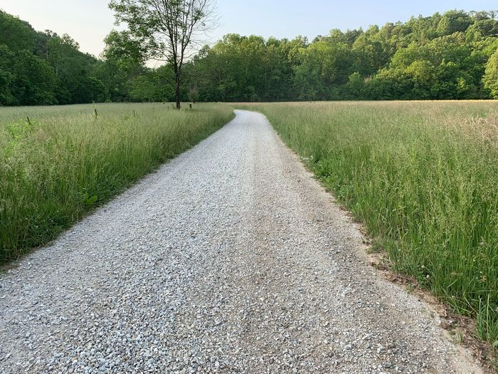 Empty road amidst trees on field