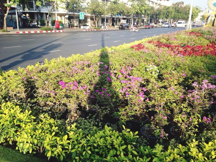 Shadow pole Ratchadamnoen Rd. Phanakorn Tanoa Rd. Bangkok Thailand Plants Road Banglumpoo Cross The Road Spotted In Thailand