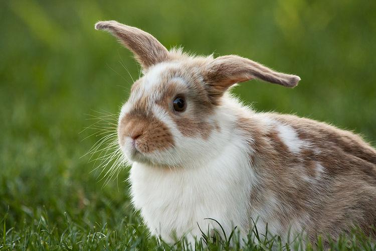 Cutest bunny ever Pets Bunnylove Rabbit Bunny  Bunny Ears  Bunny Rabbit Outdoors Cute Pets Cute Animals Cuteness Furry Friends Furry Animals Animal Love