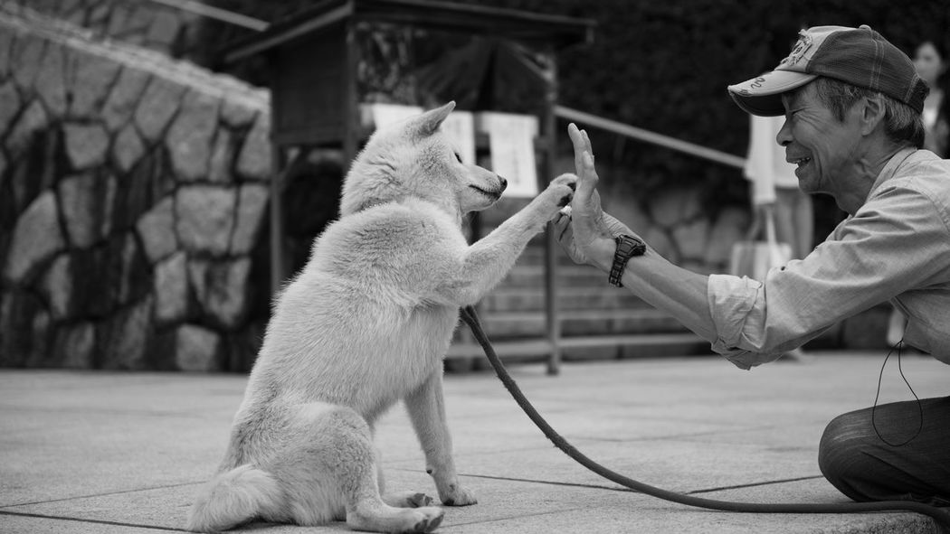 犬 high-touch 東京 Japan 犬