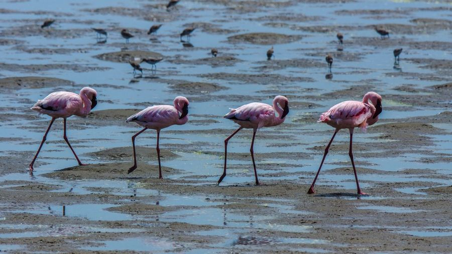Flamingos, Walvis Bay, Namibia Flamingo Bird Animals In The Wild Nature Beauty In Nature Outdoors Day Beak No People Water Animal Themes Perching