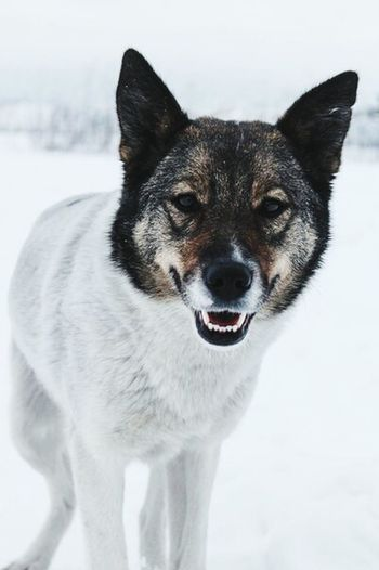 УличнаяСобака Dog Love AnimaLs <3 Dog гер