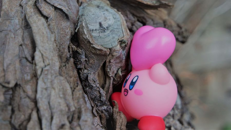 Close-up of pink balloons on tree trunk