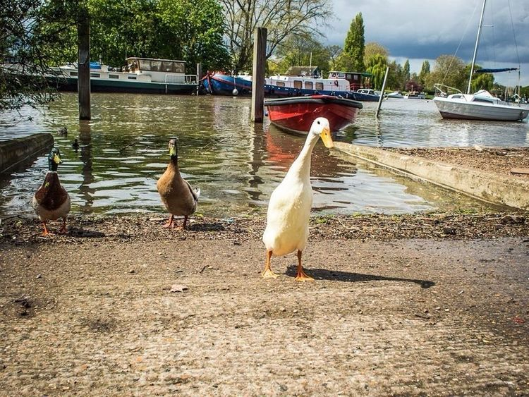 Hello World Kingston Upon Thames Around The World By Lufthansa