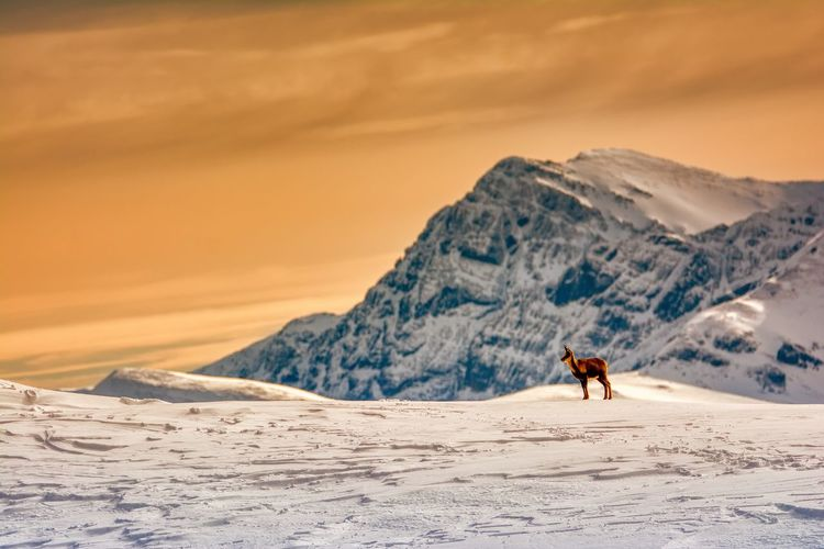 View of horse on snowcapped mountain against sky