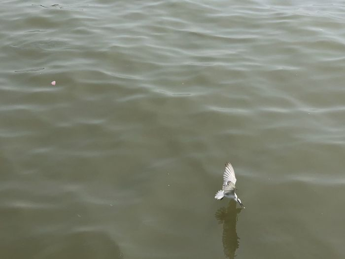Seagull eating